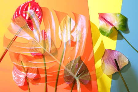 Palm leaf with colorful anthurium flowers on trendy colorful background. Summer concept.