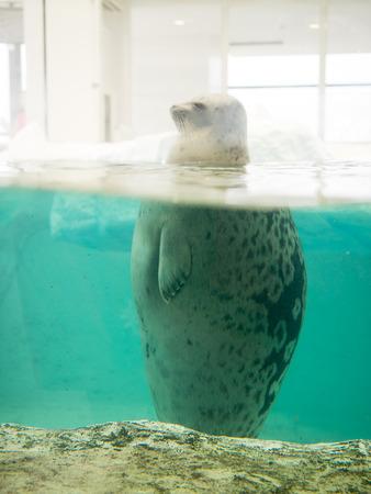 public aquarium: Sea Lion in public aquarium