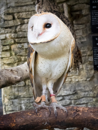 natural landmark: barn owls portrait at owls forest zoo. A natural landmark located at the end of the town.