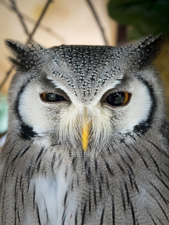natural landmark: White faced owl at owls forest zoo. A natural landmark located at the end of the town.