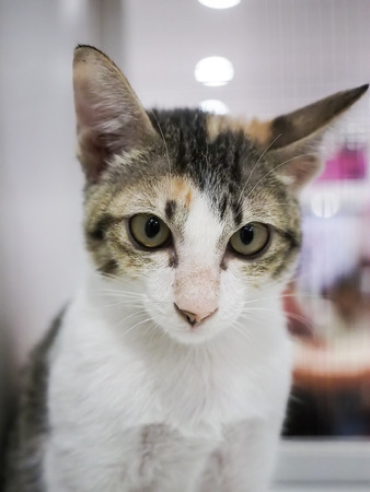 lovelorn: Bangkok, Thailand - November 22, 2015 : unidentified cat inside cage find a new home in 1st TICA Thailand Cat Show at Secon Square department store TICA : The International Cat Association