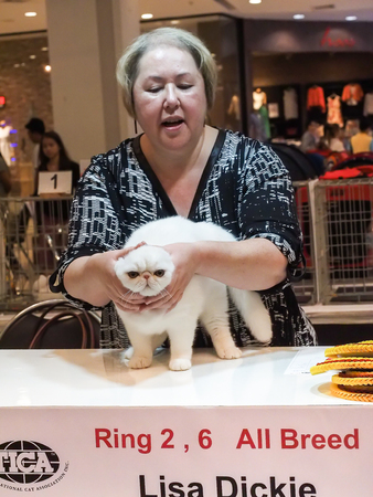 Bangkok, Thailand - November 22, 2015 : referee from tica chack a cat in 1st TICA Thailand Cat Show at Secon Square department store TICA : The International Cat Association