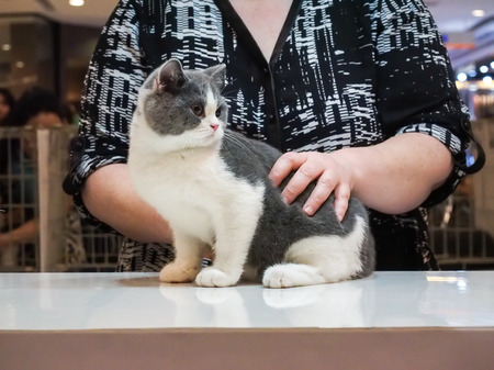 Bangkok, Thailand - November 22, 2015 : 1st TICA Thailand Cat Show at Secon Square department store TICA : The International Cat Association