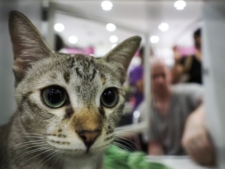 lovelorn: Bangkok, Thailand - November 22, 2015 : unidentified cat inside cage find a new home in 1st TICA Thailand Cat Show at Secon Square department store (TICA : The International Cat Association)