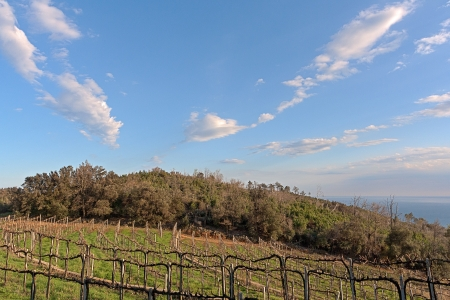 Vineyard over the sea, a beautiful sky, Noli, italy Stock Photo - 18678641
