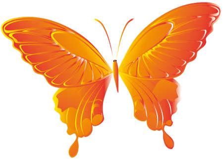 volatile: Farfalla Illustration