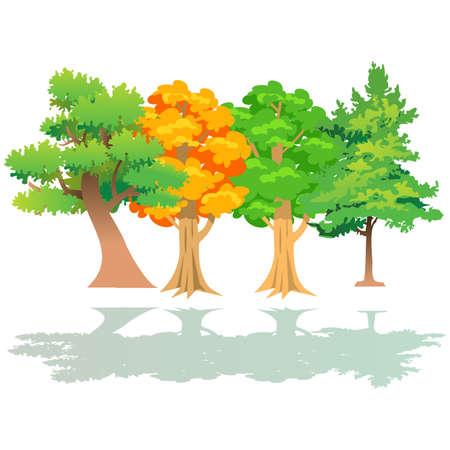 trees  Imagens