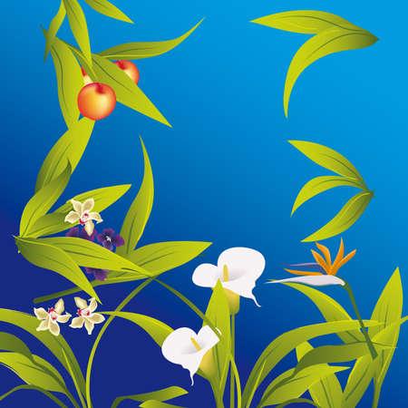 fiori Imagens