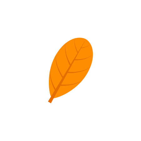 obovate maple leaf flat icon on transparent background