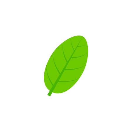 ovate maple leaf flat icon on transparent background Ilustração