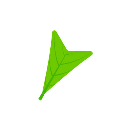 cuneate leaf flat icon on transparent background