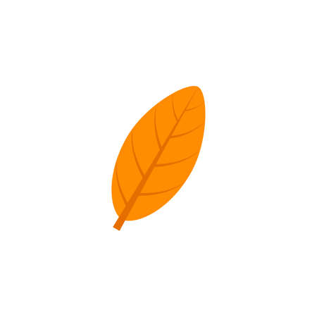Leaf flat icon on white