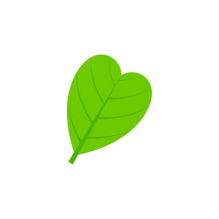 abcordate leaf flat icon on transparent background