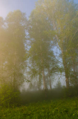 early fog: thick morning fog in the summer forest. thick morning fog in the forest at pond. Morning landscape in summer thick fog. dense fog in the morning. early morning. forest hiding in the fog.