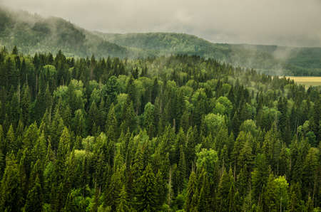 thick morning fog in the summer forest. thick fog covered with thick coniferous forest. forest with a birds eye view . coniferous trees, thickets of green forest Stock Photo