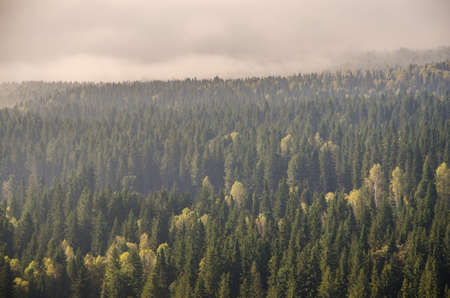 conifer tree at the top in the morning mist. thick morning mist in coniferous forest. thickets of green forest. Reklamní fotografie