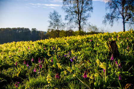 spring flowers in the forest. beautiful purple plants. beautiful yellow wildflowers. green juicy grass. morning sunrise in the woods