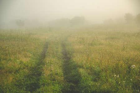 früher Morgen. Wald versteckt sich im Nebel. Waldweg