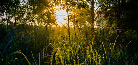 The sun's rays pass through the lush greenery. in the morning mist and dew.