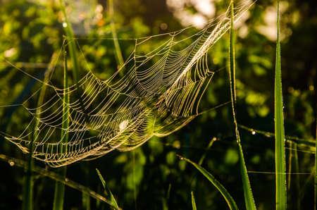 cobwebs in the morning mist. Juicy greens. Stockfoto
