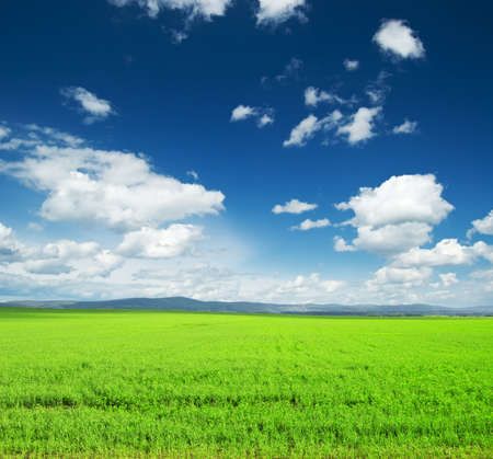 non urban scene: Beautiful summer landscape. Sky and grass.