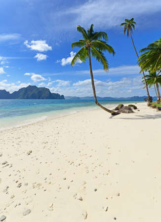 panoramic beach: Tropical white sand beach with palm trees.