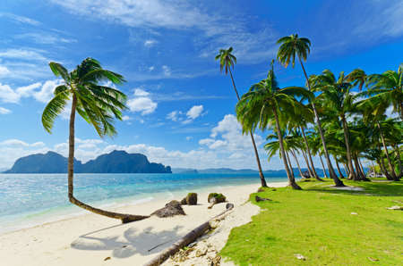 야자수와 열 대 하얀 모래 해변입니다.
