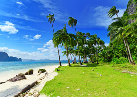 Tropical white sand beach with palm trees. Stock Photo - 9313854