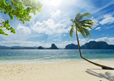 Tropical white sand beach with palm trees. Stock Photo - 9313608