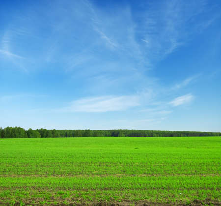 Beautiful summer landscape. Sky and grass. Stock Photo - 9313612