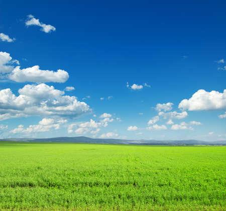 non urban: Beautiful summer landscape. Sky and grass.