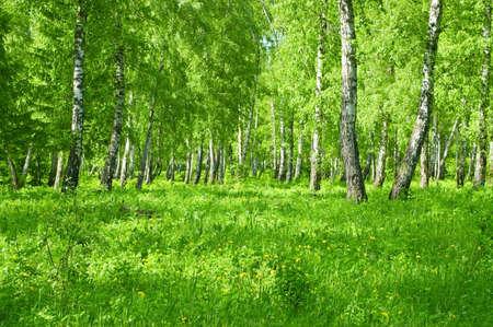 houtsoorten: