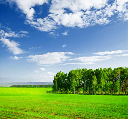 Beautiful summer landscape. Sky and grass. Stock Photo - 9315360