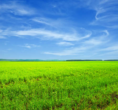 field and sky: Beautiful summer landscape. Sky and grass.