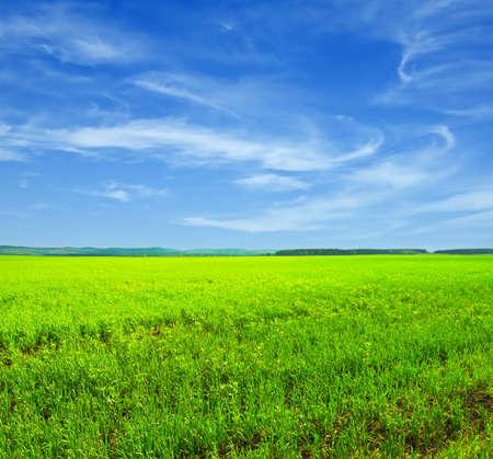 horizon over land: Beautiful summer landscape. Sky and grass.
