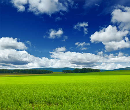 on pasture: Beautiful summer landscape. Sky and grass.