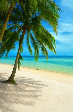 palmtrees: Beautiful tropical beach with palmtrees. Stock Photo