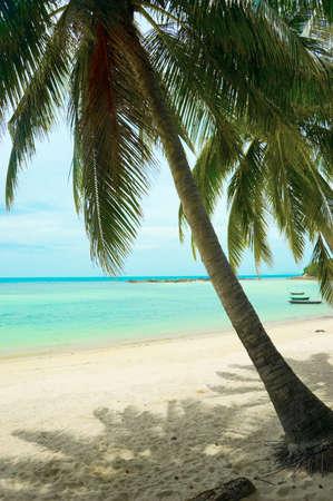 Beautiful tropical beach with palmtrees. photo