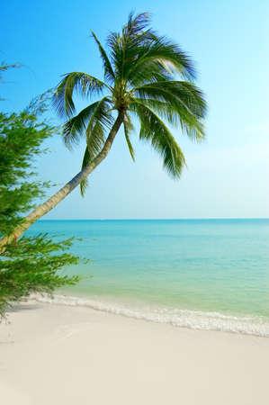 Palmtree on the tropical beach. photo