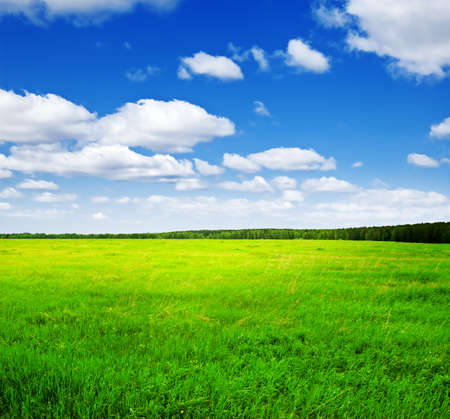 Beautiful summer landscape. Sky and grass. Stock Photo - 9332677