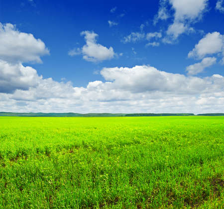 Beautiful summer landscape. Sky and grass. Stock Photo - 9332585