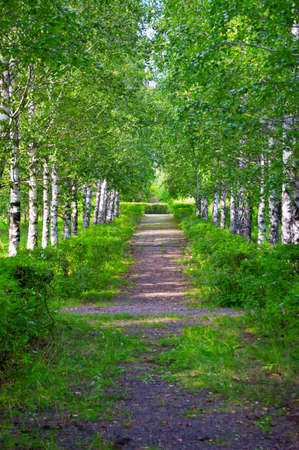 Footpath in the green park. Stock Photo - 9332676