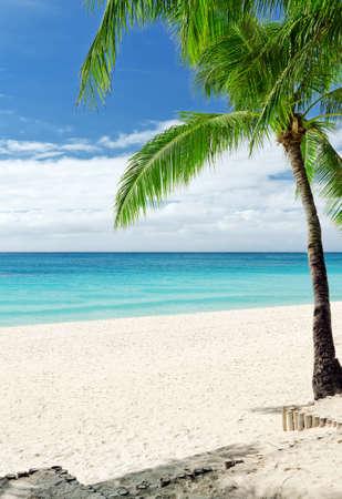 clima tropical: Playa de arena blanca tropical con palmeras. Foto de archivo