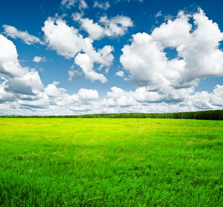 Beautiful summer landscape. Sky and grass. Stock Photo - 9615710