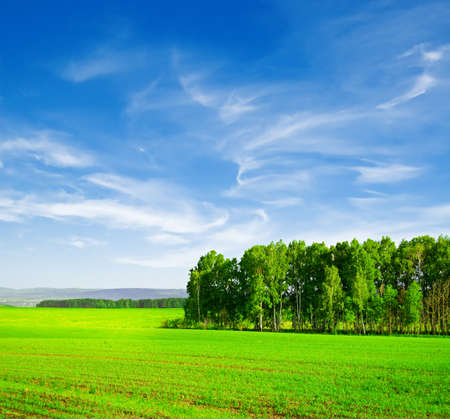 Beautiful summer landscape. Sky and grass. Stock Photo - 9615646