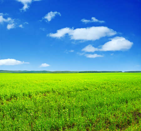 Beautiful summer landscape. Sky and grass. Stock Photo - 9615744