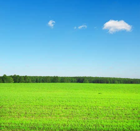 Beautiful summer landscape. Sky and grass. Stock Photo - 9739224