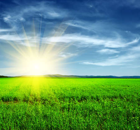 Beautiful summer landscape. Sky and grass. Stock Photo - 9739247