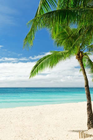 beach scene: Tropical white sand beach with palm trees.