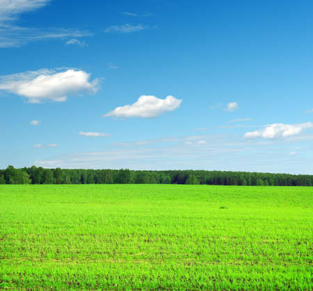 Beautiful summer landscape. Sky and grass. Stock Photo - 9873196